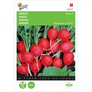 Buzzy Seeds Radish Saxa 2 - 777