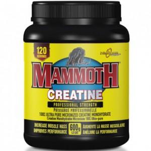 Mammoth Creatine - 600 gm